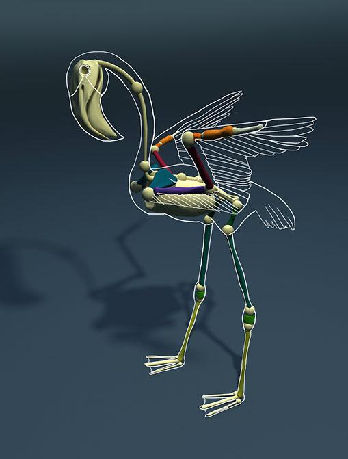 Projekt: Vergleichende Anatomie - Designdoppel - Graphic Recording ...